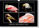 Vögel im Fokus 2021 (Wandkalender 2021 DIN A4 quer)