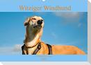 Witziger Windhund - Portugiesischer Galgo (Wandkalender 2022 DIN A2 quer)