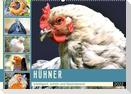Hühner. Intelligent, schön und faszinierend (Wandkalender 2022 DIN A2 quer)