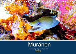 Hess, Andrea. Muränen - Kurzsichtige Jäger im Korallenriff (Wandkalender 2022 DIN A4 quer) - Muränen werden zu Unrecht als Schrecken der Meere bezeichnet (Monatskalender, 14 Seiten ). Calvendo, 2021.