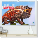 Farbwunder Chamäleon (Premium, hochwertiger DIN A2 Wandkalender 2022, Kunstdruck in Hochglanz)