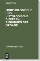 Morphologische und histologische Differenzierungen der Organe