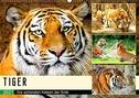 Tiger. Die schönsten Katzen der Erde (Wandkalender 2021 DIN A2 quer)