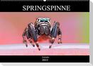 Springspinne Kalender (Wandkalender 2022 DIN A2 quer)