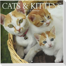 Cats & Kittens - Katzen & Kätzchen 2022 - 16-Monatskalender