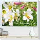 Die Königslilie (Premium, hochwertiger DIN A2 Wandkalender 2022, Kunstdruck in Hochglanz)