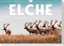 Elche - Die imposanten Trughirsche. (Wandkalender 2022 DIN A4 quer)
