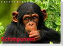 Schimpansen (Tischkalender 2022 DIN A5 quer)