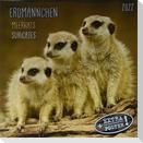 Erdmännchen - Merkats - Suricates 2022 Artwork