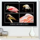 Vögel im Fokus 2021 (Premium, hochwertiger DIN A2 Wandkalender 2021, Kunstdruck in Hochglanz)