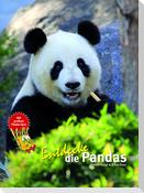 Entdecke die Pandas