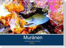 Muränen - Kurzsichtige Jäger im Korallenriff (Wandkalender 2022 DIN A4 quer)
