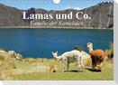 Lamas und Co. Familie der Kameliden (Wandkalender 2021 DIN A4 quer)