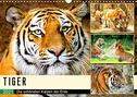 Tiger. Die schönsten Katzen der Erde (Wandkalender 2021 DIN A3 quer)