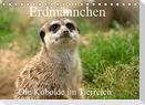 Erdmännchen - Die Kobolde im Tierreich (Tischkalender 2022 DIN A5 quer)