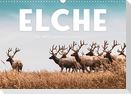 Elche - Die imposanten Trughirsche. (Wandkalender 2022 DIN A3 quer)