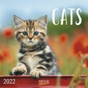 Cats 2022