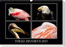 Vögel im Fokus 2021 (Wandkalender 2021 DIN A3 quer)