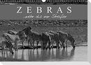 Zebras - Mehr als nur Streifen (Wandkalender 2022 DIN A3 quer)