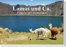 Lamas und Co. Familie der Kameliden (Wandkalender 2021 DIN A2 quer)