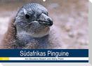 Südafrikas Pinguine 2021 (Wandkalender 2021 DIN A2 quer)
