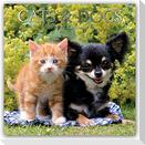 Cats & Dogs - Katzen & Hunde 2022 - 16-Monatskalender