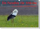 Ein Paradies für Störche (Wandkalender 2022 DIN A3 quer)