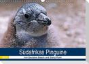 Südafrikas Pinguine 2021 (Wandkalender 2021 DIN A3 quer)