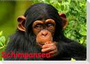 Schimpansen (Wandkalender 2022 DIN A2 quer)