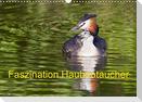Faszination Haubentaucher (Wandkalender 2021 DIN A3 quer)