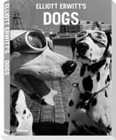 Elliott Erwitt's Dogs