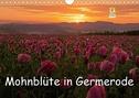 Mohnblüte in Germerode (Wandkalender 2021 DIN A4 quer)