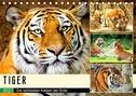 Tiger. Die schönsten Katzen der Erde (Tischkalender 2021 DIN A5 quer)