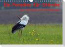 Ein Paradies für Störche (Wandkalender 2021 DIN A4 quer)