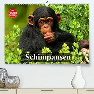 Stanzer, Elisabeth. Schimpansen (Premium, hochwertiger DIN A2 Wandkalender 2022, Kunstdruck in Hochglanz) - Des Menschen nächster Verwandter aus Mittelafrika (Geburtstagskalender, 14 Seiten ). Calvendo, 2021.