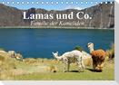 Lamas und Co. Familie der Kameliden (Tischkalender 2021 DIN A5 quer)
