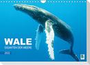 Wale: Giganten der Meere (Wandkalender 2022 DIN A4 quer)