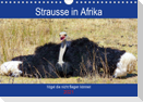 Strausse in Afrika (Wandkalender 2021 DIN A4 quer)
