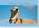 Witziger Windhund - Portugiesischer Galgo (Tischkalender 2022 DIN A5 quer)