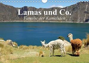 Stanzer, Elisabeth. Lamas und Co. Familie der Kame