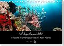 Abgetaucht! Entdecke die Unterwasserwelt des Roten Meeres (Tischkalender 2022 DIN A5 quer)