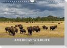 American Wildlife (Wandkalender 2022 DIN A4 quer)