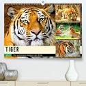 Tiger. Die schönsten Katzen der Erde (Premium, hochwertiger DIN A2 Wandkalender 2021, Kunstdruck in Hochglanz)