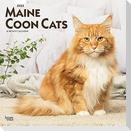 Maine Coon Cats - Maine Coon Katzen 2022 - 18-Monatskalender