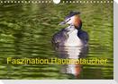 Faszination Haubentaucher (Wandkalender 2021 DIN A4 quer)