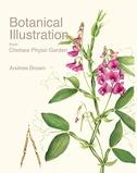 Botanical Illustration from Chelsea Physic Garden