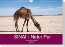 Sinai - Natur Pur (Wandkalender 2022 DIN A4 quer)