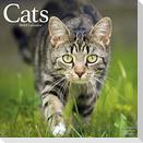 Cats - Katzen 2022 - 16-Monatskalender
