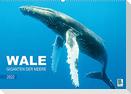 Wale: Giganten der Meere (Wandkalender 2022 DIN A2 quer)