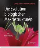 Die Evolution biologischer Makrostrukturen